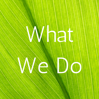 What We Do & Why